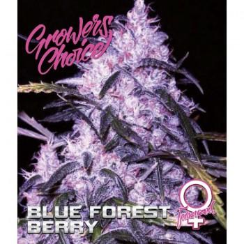 Blue forest berry Fem 3 kom. G.C.