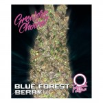 Blue forestberry feminized auto 5 kom. G.C. AKCIJA