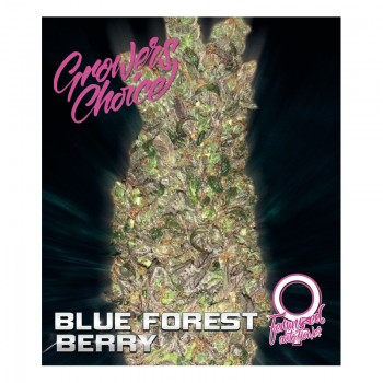 Blue forestberry feminized auto 5 kom. G.C.