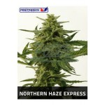 Northern Haze Express 5kom pos