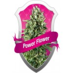 POWER FLOWER 10 kom. RQS