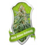 WHITE WIDOW AUTO 3 kom. RQS